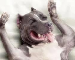 essere felice un cane sa esserlo senza problemi