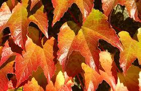 autunno fra le grinze paolo gambi